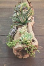 Ideas to arrange your succulent with driftwood 15